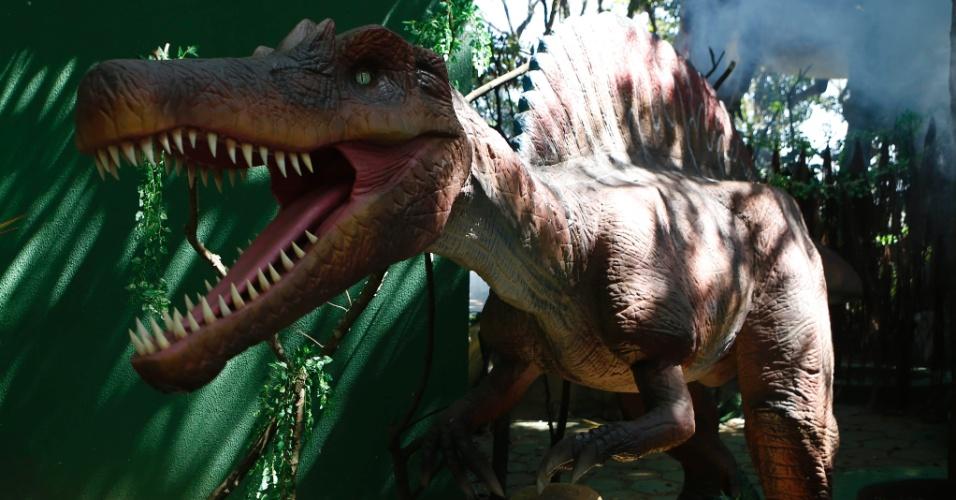 9.set.2014 - O Angaturama Limai é uma das 22 espécies de dinossauros descoberta no Brasil. Seus fósseis foram descobertos na Chapada do Araripe, no Ceará, e o seu nome deriva do tupi, que quer dizer nobre. Ele media até cinco metros de altura e oito de comprimento, chegava a pesar três toneladas e viveu há 105 milhões de anos, durante o período Cretáceo. O dinossauro é uma das 20 réplicas da exposição interativa