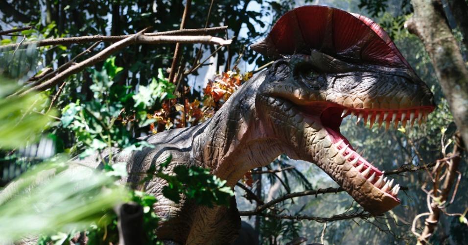 9.set.2014 - O Dilophosauro foi uma espécie de dinossauro carnívoro e bípede que media cerca de seis metros de comprimento e dois de altura. Ele viveu na América do Norte durante o período Jurássico. O dinossauro é uma das 20 réplicas da exposição interativa