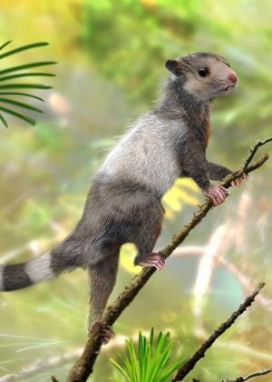 """""""Esquilos"""" viveram há pelo menos 208 milhões anos, no final do Triássico - Zhao Chuang/Divulgação"""