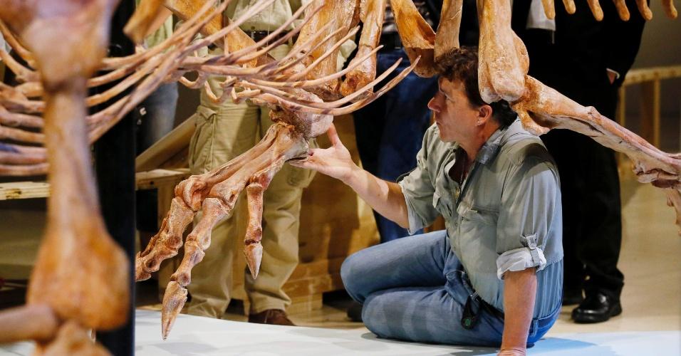 11.set.2014 - Paleontologista da Universidade de Chicago Paul Sereno toca no pé da réplica do esqueleto do Spinosaurus aegyptiacus, o maior dinossauro predador que já vagou sobre a Terra, no Museu Geográfico Nacional, em Washington DC, nesta quinta-feira (11). Uma nova exposição mostra os fósseis do Spinosaurus, descibertis há mais de 100 anos por paleontólogos alemães, mas destruídos por bombardeios em 1944, durante a primeira guerra mundial. Pesquisa divulgada nesta quinta-feira (11) afirma que esses carnívoros também eram aquáticos, qualidade rara entre os dinossauros