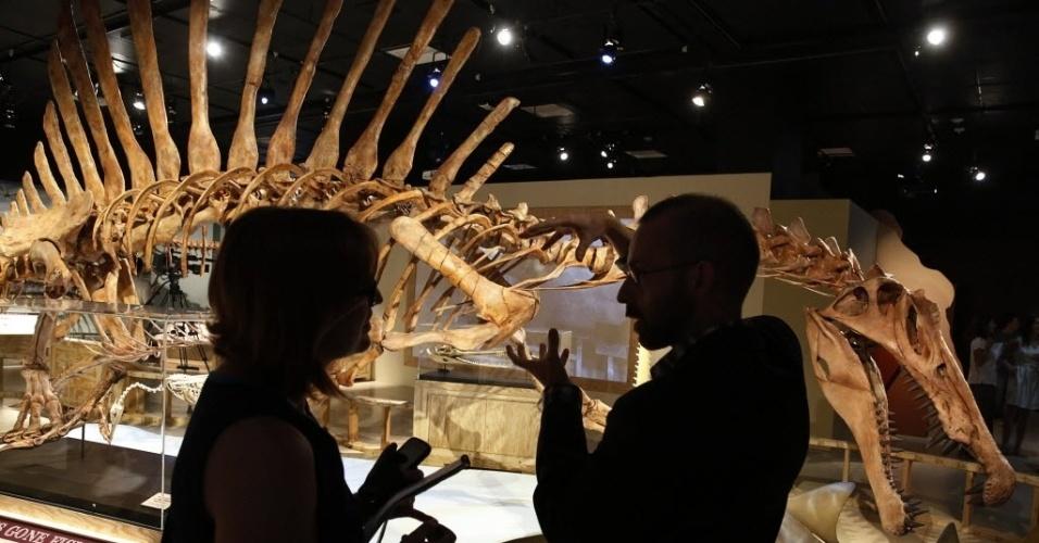 11.set.2014 - Paleontólogos observam réplica do esqueleto do Spinosaurus aegyptiacus, o maior dinossauro predador que já vagou sobre a Terra, no Museu Geográfico Nacional, em Washington DC, nesta quinta-feira (11). Uma nova exposição mostra os fósseis do Spinosaurus, descibertis há mais de 100 anos por paleontólogos alemães, mas destruídos por bombardeios em 1944, durante a primeira guerra mundial. Pesquisa divulgada nesta quinta-feira (11) afirma que esses carnívoros também eram aquáticos, qualidade rara entre os dinossauros
