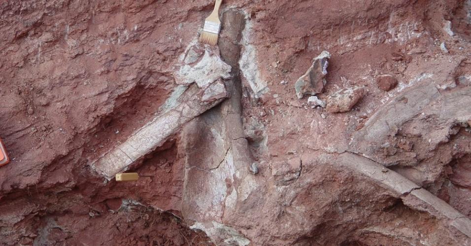 9.set.2014 - Ossos do dinossauro Rukwatitan bisepultus, descoberto na Tanzânia. Ele tinha patas dianteiras de cerca de dois metros de altura