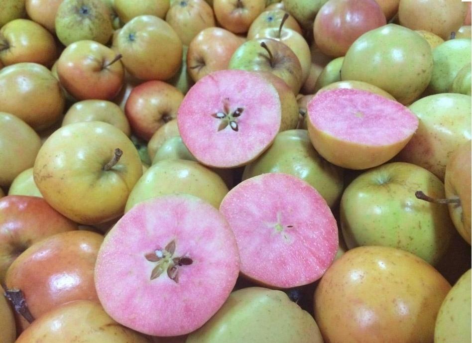 15.set.2014 - Uma empresa britânica lançou nesta semana uma maçã diferente das outras. A variedade chamada de Surpresa tem a casca amarelada e a parte interior rosada. A fruta,  desenvolvida pelo produtor William Barnett, será vendida em pacotes com quatro unidades por £ 1,75 (aprox.R$ 6,63)