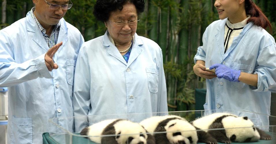 20.set.2014 - Filhotes de panda trigêmeos descansam no Chimelong Safari Park, em Guangzhou (China), neste sábado (20)