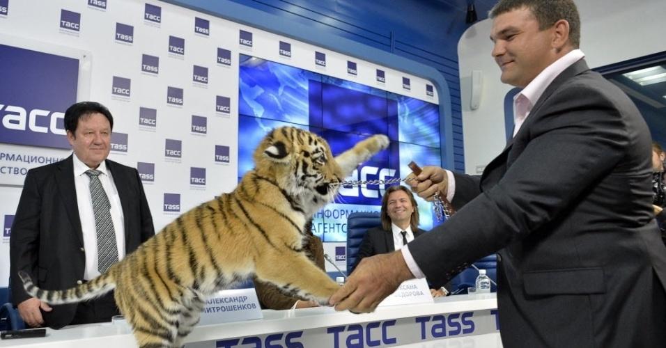 22.set.2014 - Treinador brinca com filhote de um tigre de Amur, também conhecido como tigre da Sibéria, durante apresentação nesta segunda-feira (22) em Moscou de um novo personagem de programa infantil da televisão russa. Inspirado na campanha do presidente Vladimir Putin de preservação do maior felino do mundo, o tigre será personagem de desenho animado no país