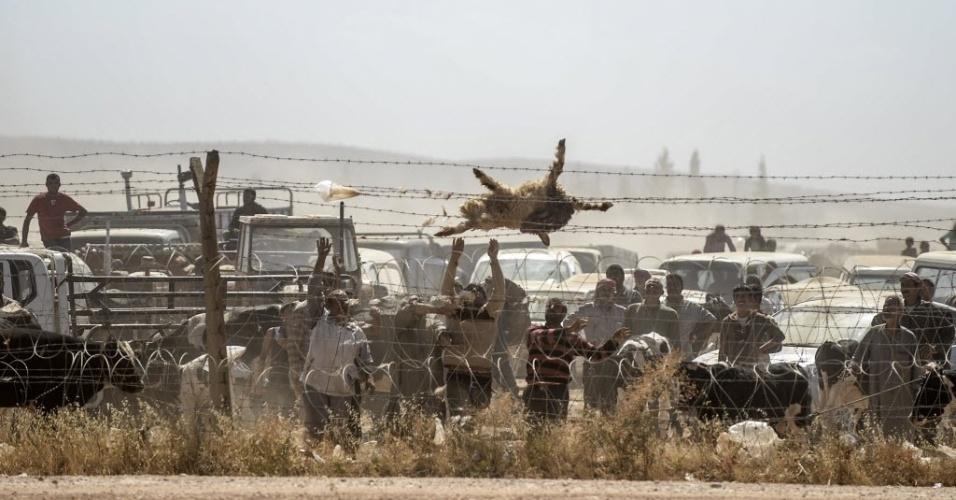 23.set.2014 - Refugiados curdos jogam ovelha morta em cerca de arame em protesto contra falta de água para seus animais na fronteira entre a Síria e a Turquia na cidade de Suruc, na província de Sanliurfa. A ONU alertou que 400 mil pessoas devem tentar entrar na Turquia fugindo da violência do Estado Islâmico