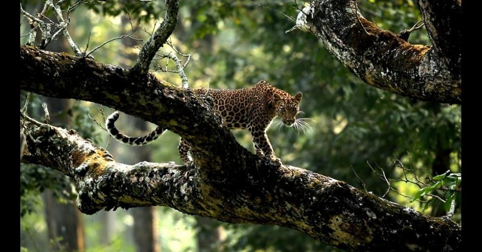 Nagarjun Ram, também de 17 anos, foi um dos finalistas na categoria juvenil com esta foto de um leopardo feita em Kabini, no estado de Karnataka, na Índia.