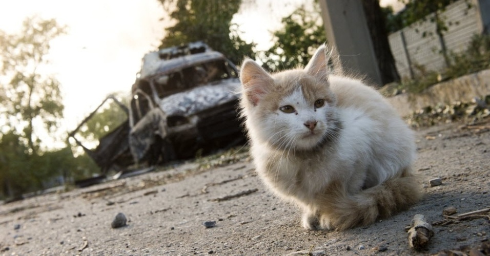 2.out.2014 - Um gatinho se senta em frente de um veículo queimado por um bombardeio que aconteceu no distrito de Oktyabrsky, em Donetsk, na Ucrânia, nesta quinta-feira (2). As autoridades da Ucrânia e os rebeldes pró-Rússia dizem ambos ter o controle sobre o aeroporto da cidade de Donetsk, no leste do país, onde os combates que começaram nesta manhã continuam, segundo reconheceram os dois grupos