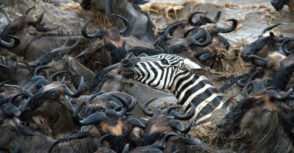 """3.out.2014 - """"Eu já fiz mais de 20 viagens à região selvagem da África, mas nunca vi nada parecido com isso"""", disse o fotógrafo"""