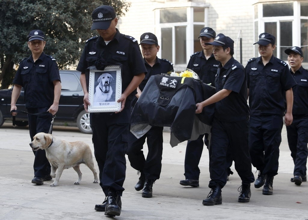 10.out.2014 - Agentes policiais carregam o caixão do cão policial WangCai durante seu funeral em uma delegacia da polícia em Wuhan, na província de Hubei, na China, nesta quinta-feira (9). O cão policial era um Labrador Retriever e tinha 12 anos. O agente animal havia trabalhado durante os Jogos Olímpicos de Pequim em 2008