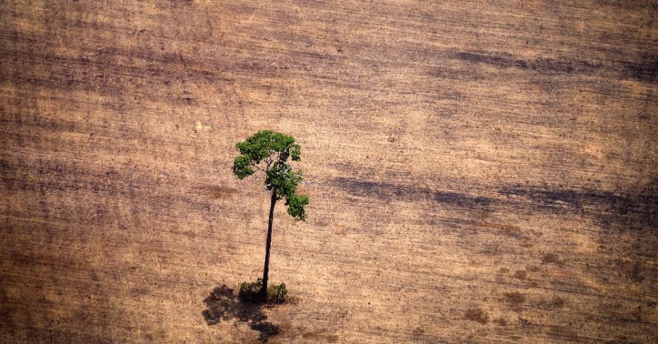 """15.out.2014 - Uma árvore resiste em área desmatada no meio da selva amazônica. Ativistas do Greenpeace sobrevoaram áreas de exploração ilegal de madeira, para o relatório """"Crise Silenciosa da Amazônia"""", no Pará"""