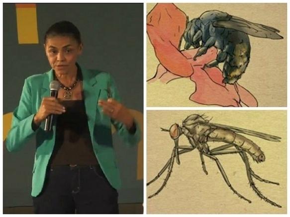 """Marina Silva compara a si mesma e Dilma Rousseff com mangangá e carapanã, insetos brasileiros, e diz que o que representa a petista é """"fortinho"""""""