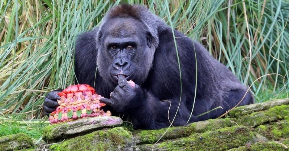 23.out.2014 - Gorila fêmea come um bolo para celebrar seu aniversário de 40 anos no zoológico de Londres, na Inglaterra, nesta quinta-feira (23)