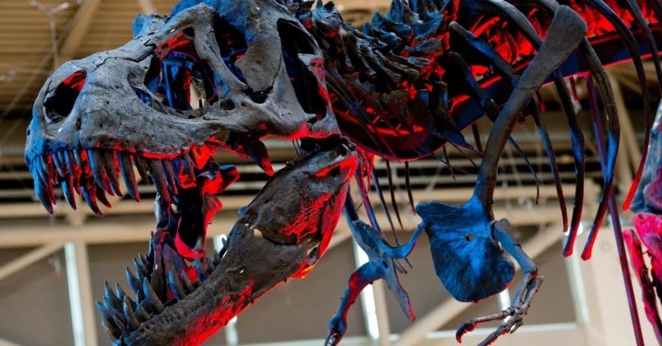 24.out.2014 - O esqueleto de um Tiranossauro Rex adulto é iluminado por luzes coloridas durante a exibição 'The Munich Show