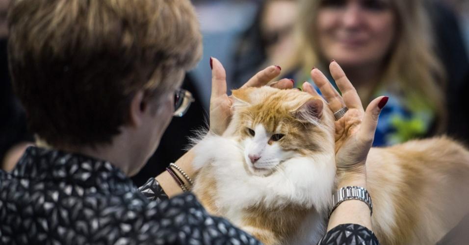25.out.2014 - Jurada avalia gato da raça kurilian bobtail durante exposição mundial de gatos em Praga, na República Tcheca, no sábado
