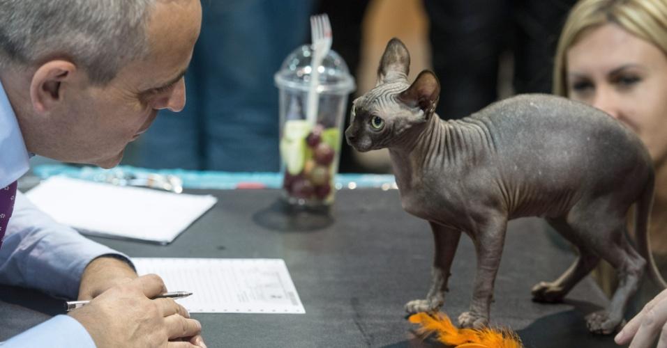 25.out.2014 - Jurado avalia gato da raça oriental de pelo curto durante exposição mundial de gatos em Praga, na República Tcheca, no sábado