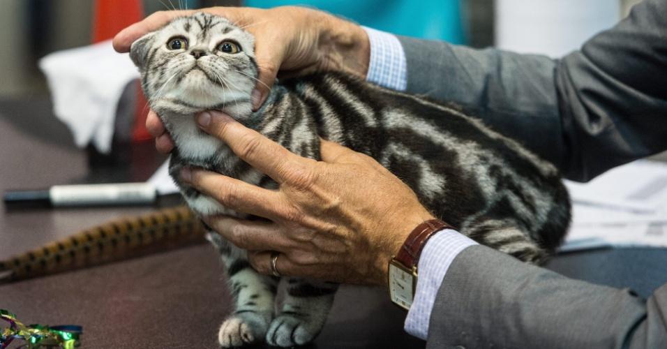 25.out.2014 - Jurado segura gato da raça Scottish Fold durante exposição mundial de gatos em Praga, na República Tcheca, no sábado