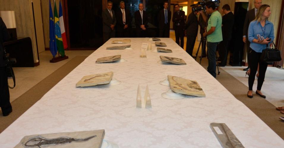 4.nov.2014 - O governo da França entregou fósseis de Mesosaurus braziliensis de grande valor científico, exportados ilegalmente para a Europa e apreendidos pela aduana francesa, à Polícia Federal