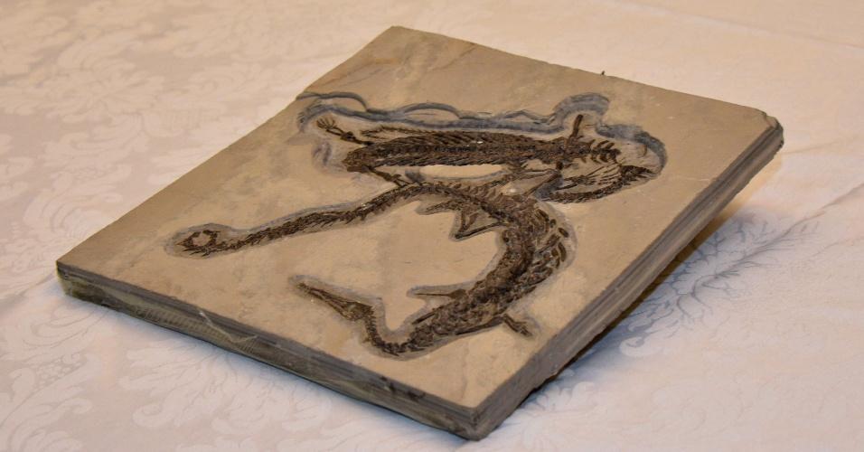 5.nov.2014 - O governo da França entregou fósseis de Mesosaurus braziliensis de grande valor científico, exportados ilegalmente para a Europa e apreendidos pela aduana francesa, à Polícia Federal