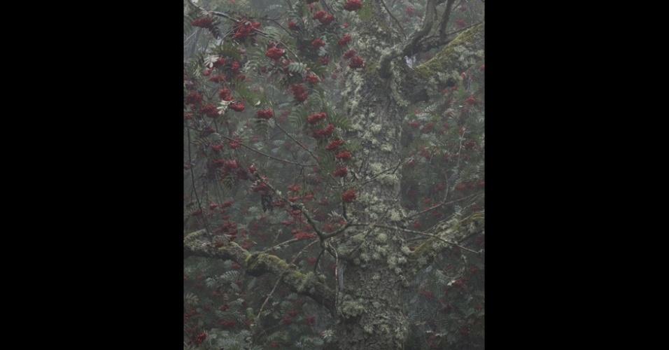 11.nov.2014 - Esta foto de frutinhas vermelhas, Bowdown Berries, deu o prêmio da categoria Sua Vista a Robert Oliver