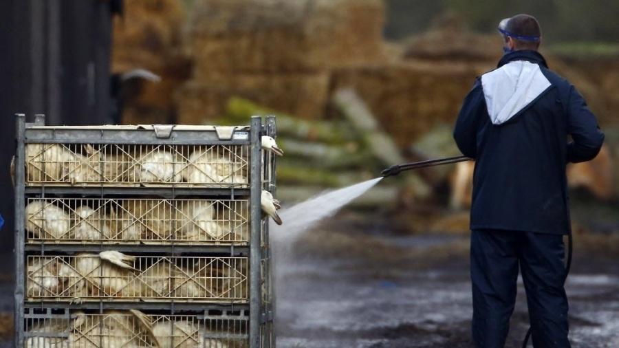 Rápida disseminação dos últimos surtos fizeram desta uma das piores ondas da gripe aviária na Ásia desde o início da década de 2000 - Darren Staples/ Reuters