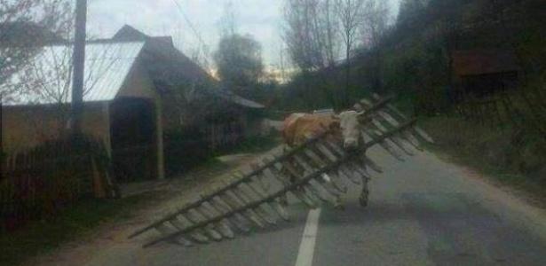 Animals stuck in odd places that don't seem to mind/ Reprodução