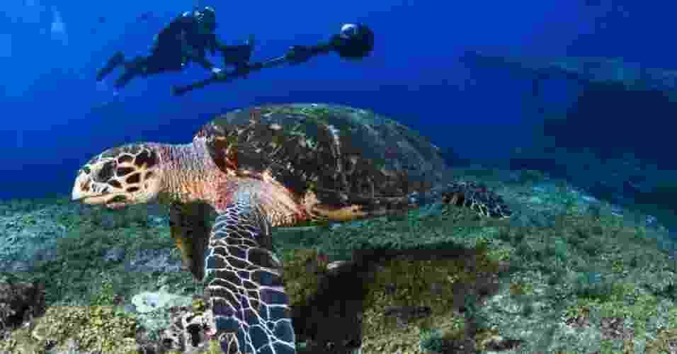 Uma câmera especial do Google mapeou, durante 12 dias, 6 km dos mares do arquipélago de Fernando de Noronha, na costa Nordeste do Brasil. As imagens serão conectadas a pontos específicos de geolocalização - Cortesia Catlin Seaview Survey