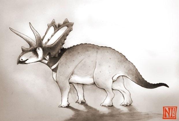 27.nov.2014 - NOVA ESPÉCIE DE DINOSSAURO - O paleontólogo americano Nick Longrich anunciou a identificação de uma nova espécie de dinossauro pentacerápode que viveu há 75 milhões de anos. A nova espécie de pentacerápode, chamada de Pentaceratops aquiloniua, era um dinossauro herbívoro do tamanho de um búfalo, que se caracterizava pelo crânio em formato de coroa e chifres. A descoberta foi feita enquanto Longrich examinava a coleção de fósseis do Museu Canadense da Natureza que foram encontrados na Austrália