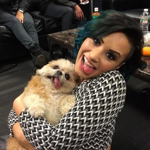 30.nov.2014 - Adotada em 2012, a cachorrinha Mernie, da raça Shih Tzu, ficou famosa na internet por conta da sua grande língua para fora da boca e da cabeça inclinada para a direita, sequela de uma síndrome vestibular que a atingiu antes de ser adotada, em 2012. Na foto, Mernie é tietada pela cantora Demi Lovato