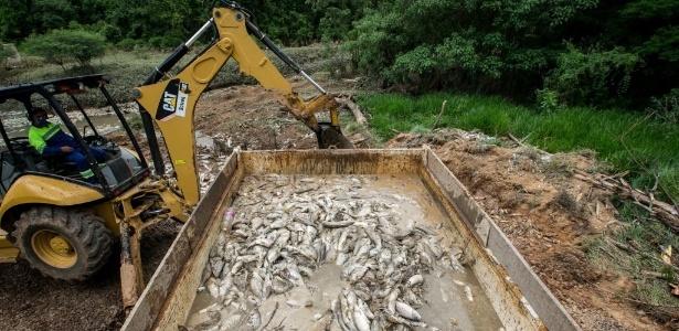 A mortandade de peixe é a maior já registrada no município, diz secretário - Bruno Poletti/Folhapress