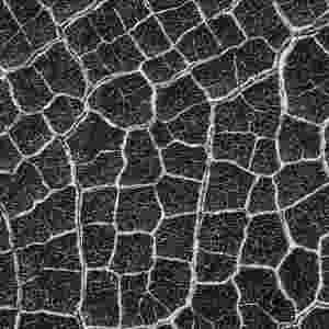 """3.dez.2014 - De longe, o piso desta cratera de Marte parece um favo de mel gigante ou uma teia de aranha. As formas de interseção, ou polígonos, são mais comuns nas planícies ao norte do planeta. Com a curadoria de artistas, fotógrafos e editores de fotografia, a Nasa (agência espacial americana) reuniu uma série de imagens para compor a """"exposição online"""" chamada de """"Marte como Arte"""" - Nasa/JPL-Caltech/Arizona State University"""