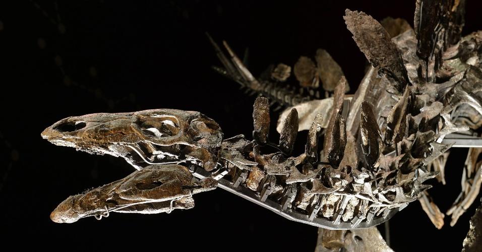 3.dez.2014 - O esqueleto do estegossauro mais completo do mundo é exibido no Museu de História Natural, em Londres, no Reino Unido, nesta quarta-feira (3). O fóssil de 150 milhões de anos é o primeiro esqueleto de dinossauro completo em exibição no museu em quase 100 anos, segundo a imprensa local