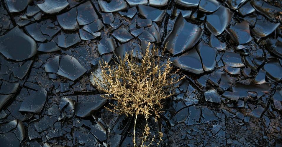 10.dez.2014 - Um derramamento de petróleo deixou contaminada uma área do deserto de Evrona, próximo ao mar Vermelho, na cidade de Eilat, em Israel, nesta quarta-feira (10). Ecologistas afirmam que poderá levar anos para que se limpe completamente o petróleo derramado na reserva natural israelense. Os mais de 5 milhões de litros do combustível ameaçam se espalhar pela costa do mar Vermelho e chegar ao país vizinho, a Jordânia