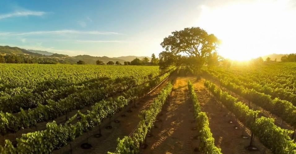 Até agora, entusiastas da fotografia por drone estão ainda experimentando e descobrindo as várias possibilidades do recurso. (Pôr do sol em um vinhedo, Santa Inez, Califórnia)