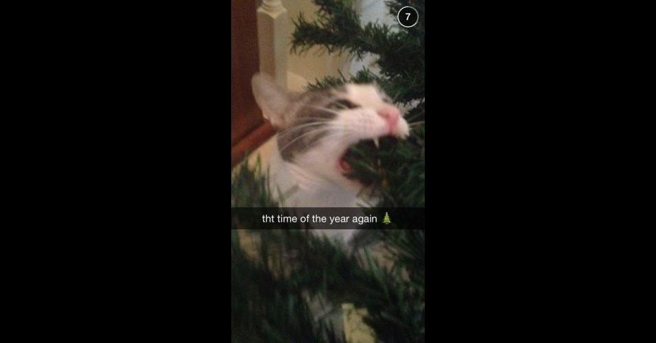Pets destruindo decoração de Natal