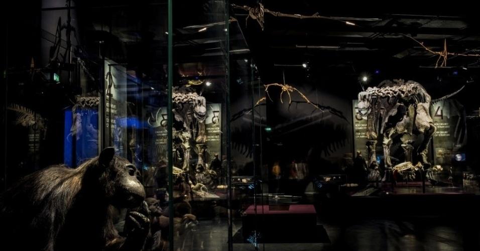 20.dez.2014 - Visitante observa esqueletos de animais durante uma visita ao museu de Ciência e Arqueologia inaugurado em Lyon, na França. Projetado pelo arquiteto austríaco Coop Himmelb, o museu foi aberto ao público neste sábado (20)