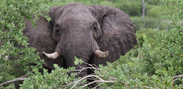 Elefante domesticado atacou guia no parque nacional Victoria Falls, no Zimbábue - Xinhua/Stringer