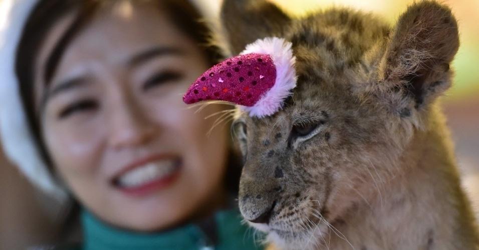23.dez.2014 - Filhote de leão batizado de Dominjun é fotografado com gorrinho de papai noel durante um evento de Natal no parque Everland, em Yongin, ao sul de Seul, Coreia do Norte. Everland é o maior parque de diversões e fez uma festa para comemorar os 100 dias de vida do felino