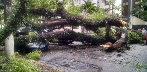 Árvore cai na rua Itacolomi, em Higienópolis, região central de SP e atinge dois carros - Carlos Iavelberg/UOL