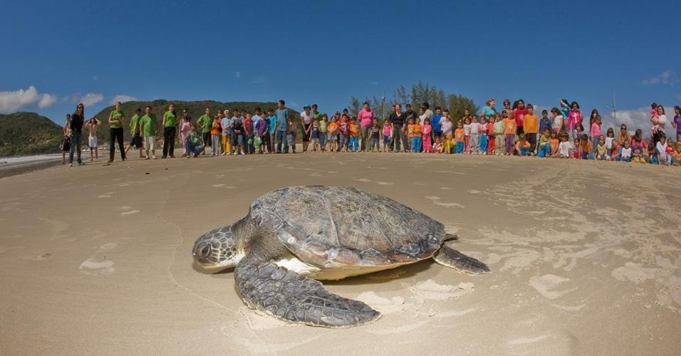 26.dez.2014 - O projeto Tamar de Florianópolis fez a última soltura de tartaruga de 2014. A ação foi assistida por cerca de 700 pessoas, na Barra da Lagoa, que participaram do trabalho de educação ambiental na tarde de Natal (25)