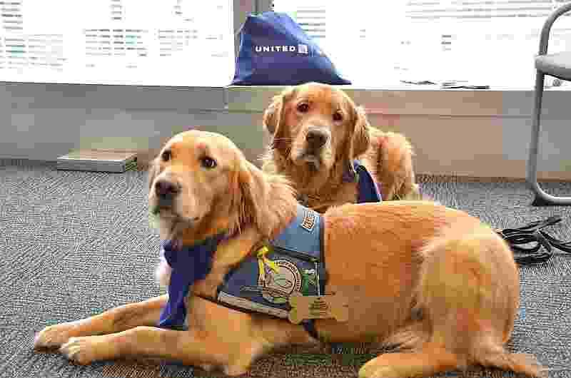 A companhia aérea norte-americana United Airlines levou uma equipe de cachorros para o aeroporto internacional de Chicago (EUA) - Divulgação