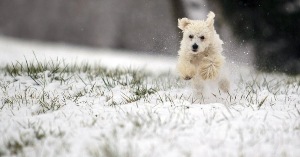 28.dez.2014 - Cão passeia neste domingo (28) pela neve no sudoeste de Budapeste, na Hungria