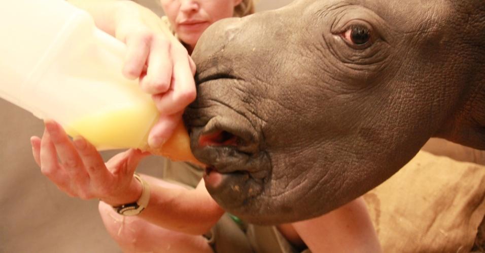 28.dez.2014 - Filhote de rinoceronte é alimentado no zoológico de Werribee, na Austrália, neste domingo (28). O animal nasceu saudável, pesando 67 kg