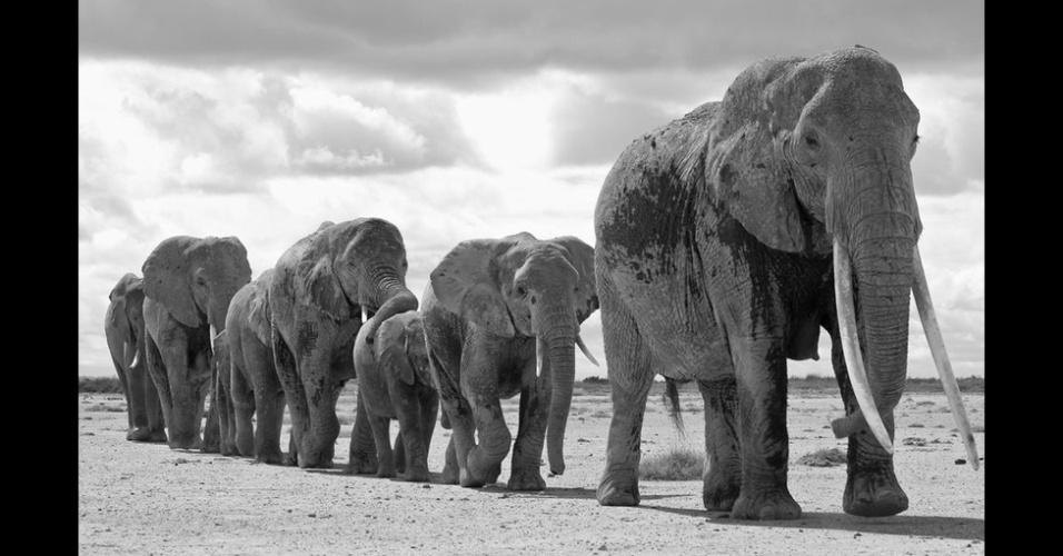 29.dez.2014 - Esta imagem de uma matriarca levando o grupo de elefantes para a água foi feita por Graeme Shannon. Os juízes do concurso deram muito destaque para esta foto
