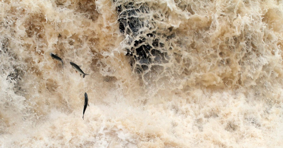 2.jan.2015 - Baixo volume de água do rio Piracicaba, na cidade de Piracicaba, interior de São Paulo, revela a migração dos peixes que sobem o rio para desova. O fenômeno da piracema já é possível com os atuais níveis do manancial