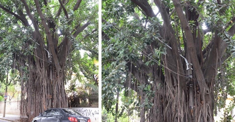 2.jan.2015 - Um poste encravado no meio de uma árvore de grande porte é visto na calçada do antigo Hospital Matarazzo, na rua Rio Claro, bairro da Bela Vista, em São Paulo, nesta sexta-feira (2). O poste serve de suporte para cabos de energia e linhas de telefone
