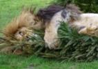 Reprodução/Facebook/Linton Zoo
