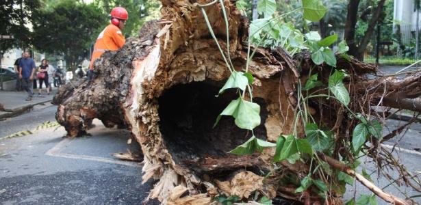 Funcionários da prefeitura iniciam corte e retirada da árvore que caiu sobre veículo - Luíz Claudio Barbosa/Futura Press/Estadão Conteúdo