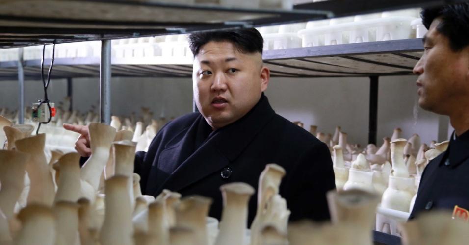 10.jan.2015 - O líder norte-coreano, Kim Jong-un, inspecionou a recém-construída nova fazenda de cogumelos do país de Pyongyang, a capital do país asiático. Após visitar todos os setores do empreendimento, Kim estimulou as províncias, cidades e condados da Coreia do Norte a criarem fazendas semelhantes em suas regiões