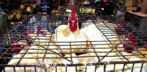Galinhas são mantidas em gaiola pouco antes de serem sacrificadas no mercado de Hunan em Taipé, Taiwan, em 2015